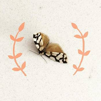 I Found This Pretty Little Moth On My by Jaz Higgins