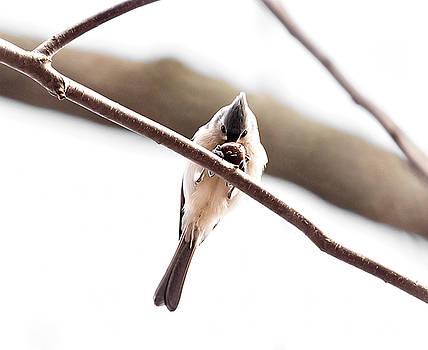 I has a nut by James Figielski by Paulinskill River Photography
