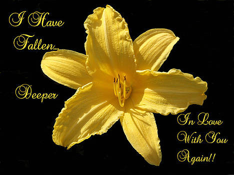 I Have Fallen ....Yellow Lilly by Dawn Hay