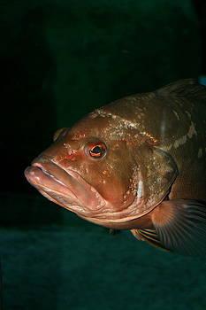David Dunham - I Just Look Grumpy