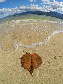 I Leaf You by Megan Martens