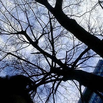 I Like The Way The Late-day Sky Hits by Imani Singletary