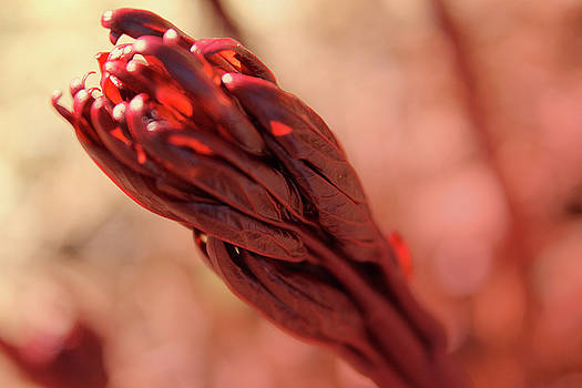 Scott Hovind - I Saw Red