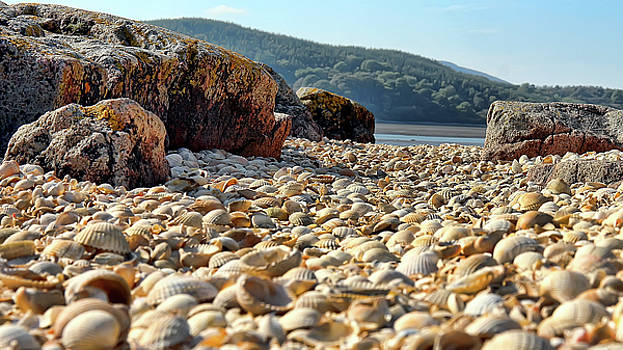 I Saw Sea Shells by Andy Griffiths