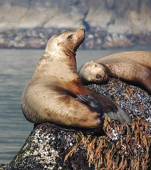 I Sea Lion Napping by Red Cross
