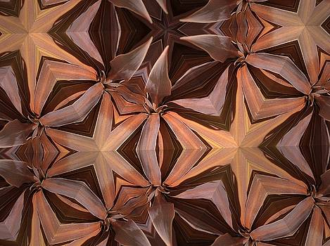 I See Stars by Sylvan Adams