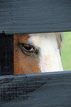 I See You by Ann Sullivan