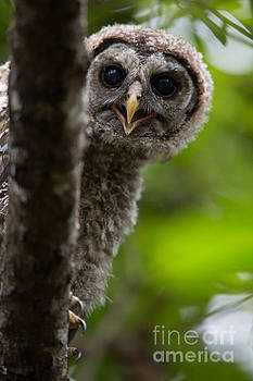 I See You There by Natural Focal Point Photography