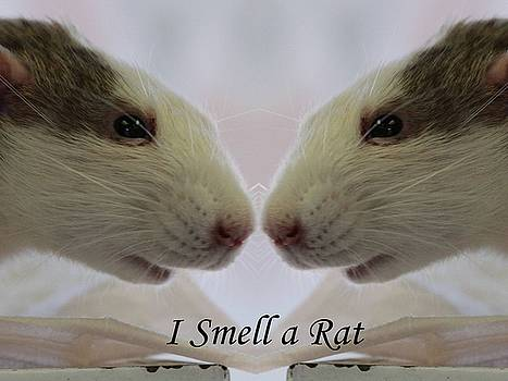 Gary Canant - I Smell a rat