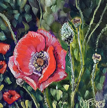 I Stand Alone Poppy by Melissa Torres