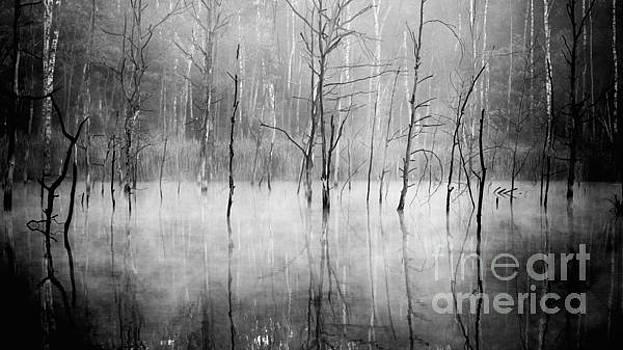 VooDoo by Pawel Klarecki