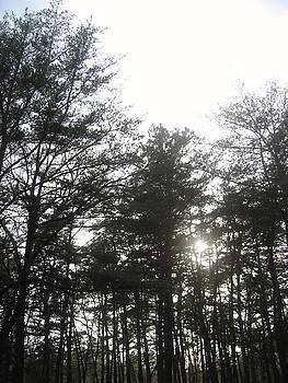 I Walk Among The Trees by Jennifer  Sweet