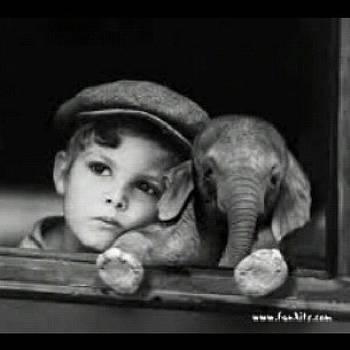 I Want A Baby Elephant!!! by Melanie Conway