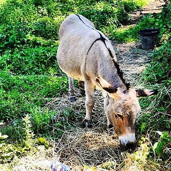 I Want One. #minidonkey by Carly Barone