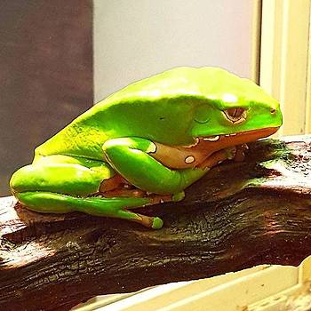 I Wonder If This Grumpy Tree Frog 🐸 by Dante Harker