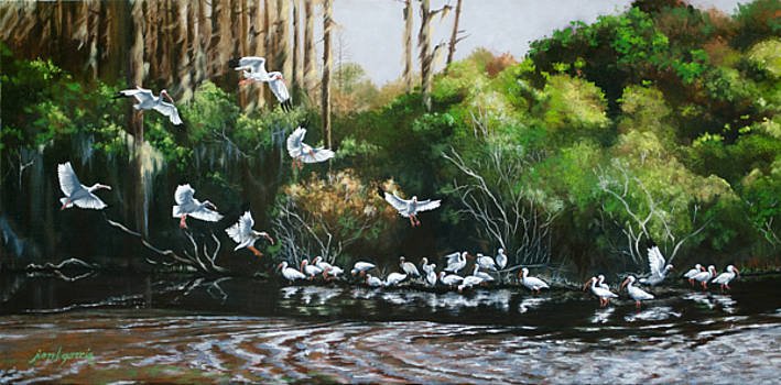Ibis Landing by Joan Garcia