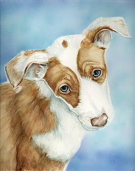 Ibizan Hound Puppy by Charlotte Yealey
