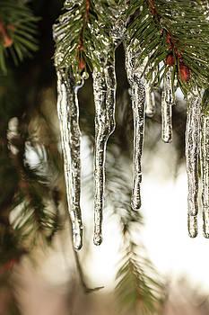 Ice at the Arboretum by Joni Eskridge