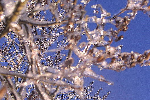 Tammy Bullard - Ice Branches