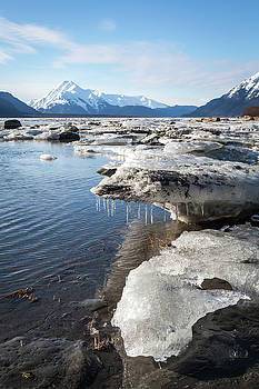 Ice chunks in the Chilkat Estuary by Michele Cornelius