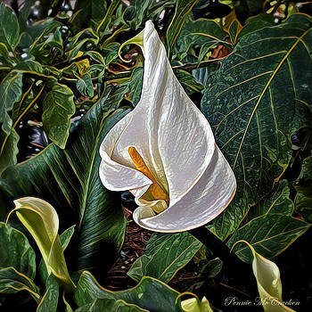 Ice Cream Calla Lily by Pennie  McCracken