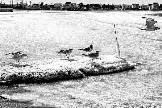 John Rizzuto - Ice Crew on Long Beach Island