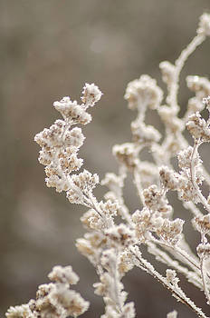 Ice Crystals by Carl Nielsen