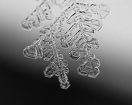 Ice Feather by Tim Kirchoff