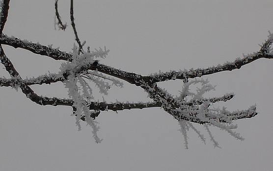Ice Flowers by Iancau Crina