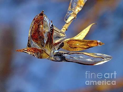 Cindy Treger - Ice Hummingbird - Natures Sculpture