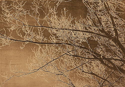 Ice Storm Branches - Black by Michelle Miron-Rebbe