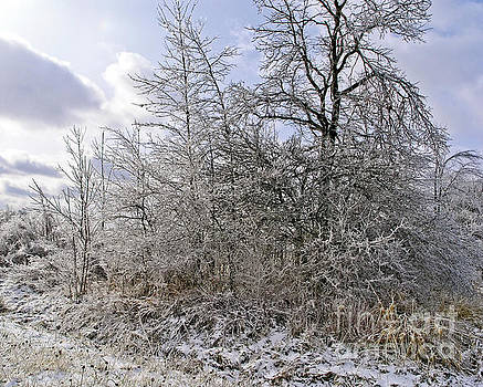 Ice Storm by Gary Onuschak
