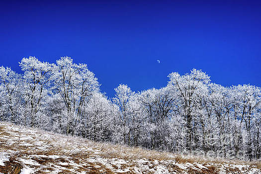 Iced Trees and Moon by Thomas R Fletcher