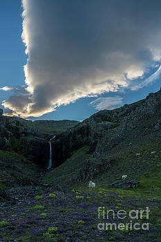 Iceland One Massive Cloud and Sheep by Mike Reid