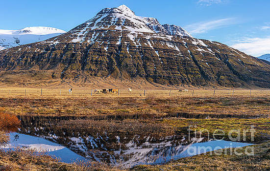 Iceland Ring Road Horse Pastures by Mike Reid