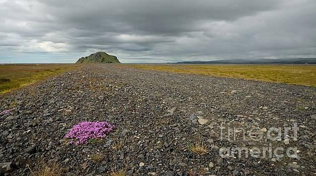 Iceland road by Mats Bjoerklund
