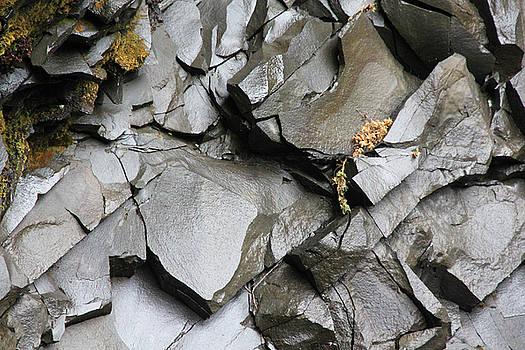 Iceland Wet Rocks and some Vegetation Iceland 2 2262018 1545.jpg by David Frederick
