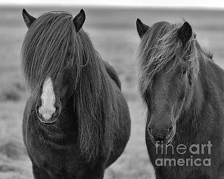 Icelandic Horses Duo bw by Jerry Fornarotto