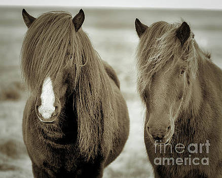 Icelandic Horses Duo Coffee by Jerry Fornarotto