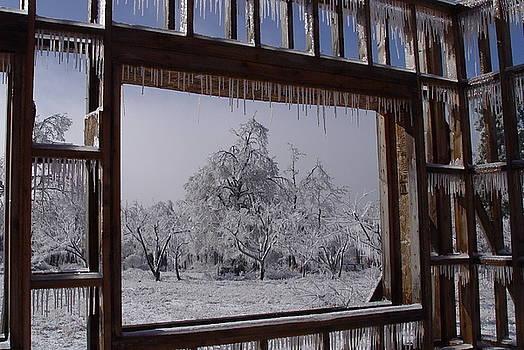 Alana  Schmitt - Icey view