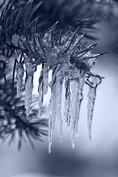 Icicle by Bianca Collins