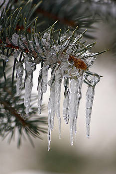 Icicle Melts by Bianca Collins