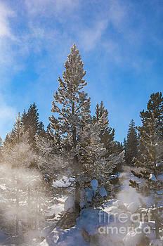 Bob Phillips - Icy Pine