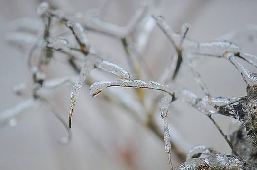 Icy plant by Emilia Brasier