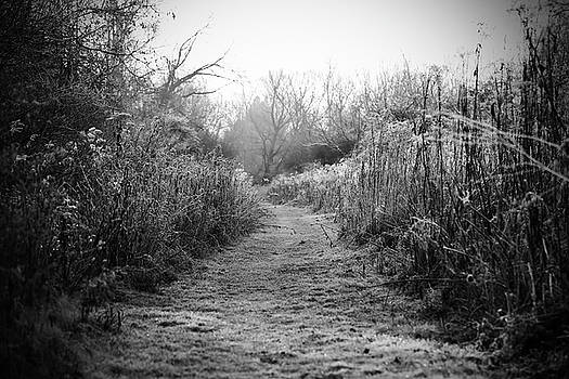 Icy Trail in Black and White by Brooke T Ryan