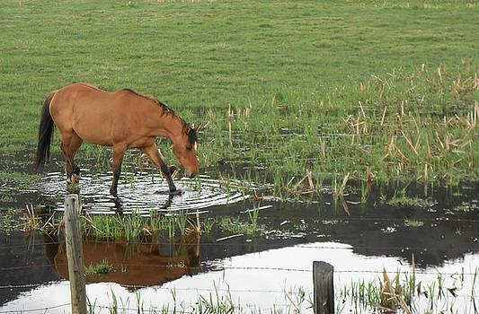 Idaho Farm Horse 2 by Cynthia Powell