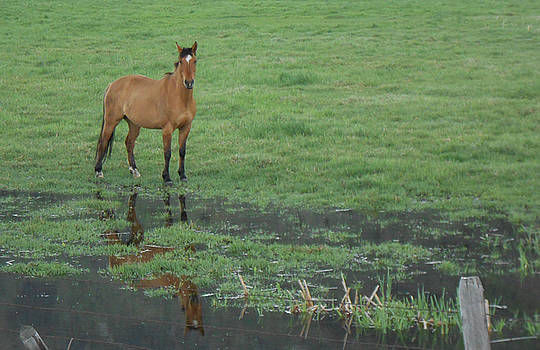 Idaho Farm Horse1 by Cynthia Powell