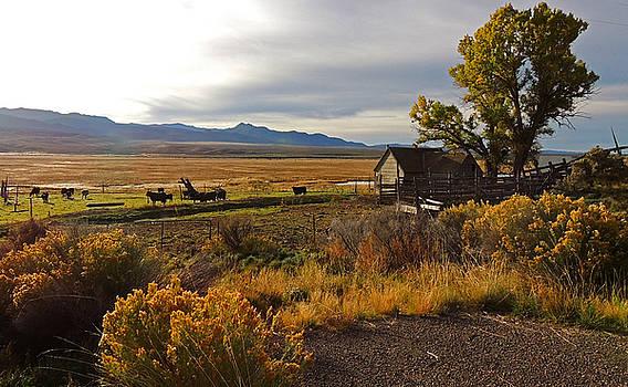Idaho Farmland by Charlotte Schafer
