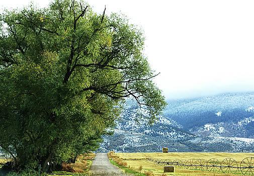 Idaho Road Trip by Cynthia Powell