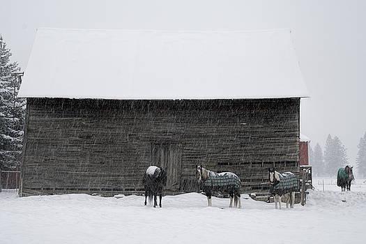 Idaho Winter by Eric Bjerke Sr
